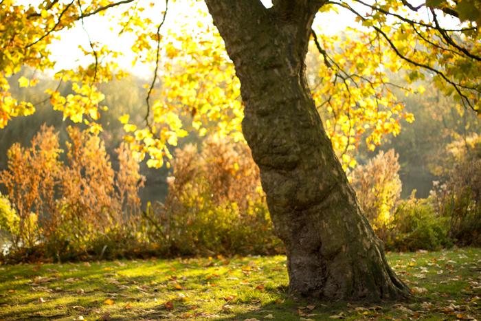 vondelpark-herfst-amsterdam-golden-hour