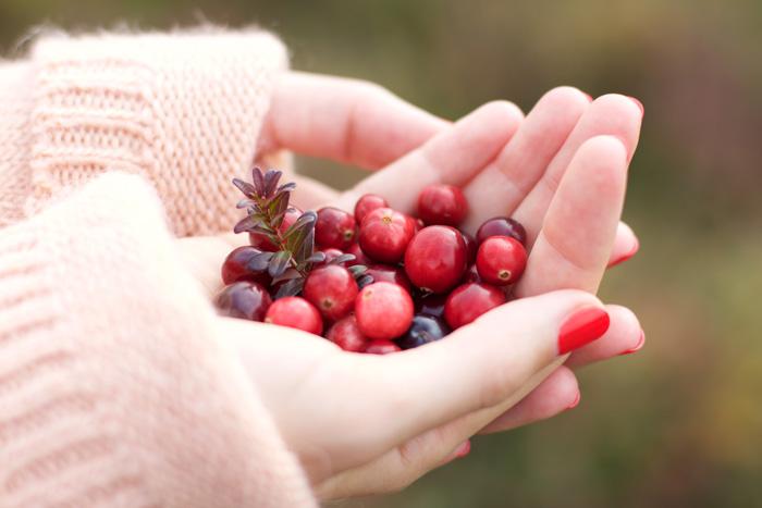 cranberry harvest terschelling