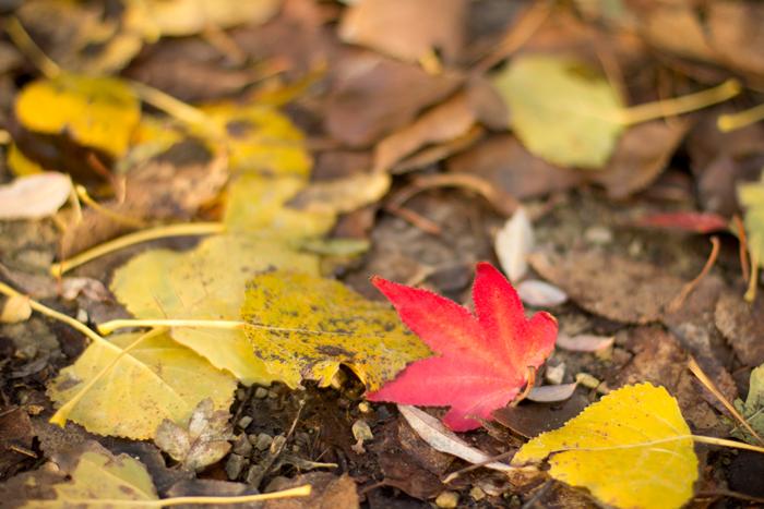 herfst-vondelpark